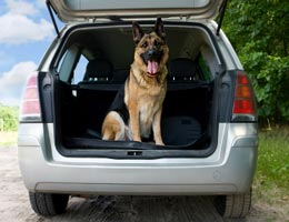 Pets need auto injury coverage, too