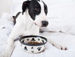 Dog and dog food bowl