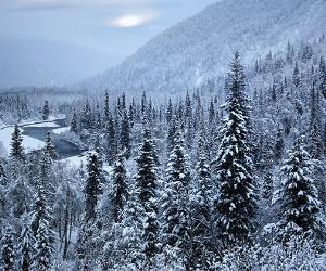 alaska snow covered trees © Doug Lemke/Shutterstock.com