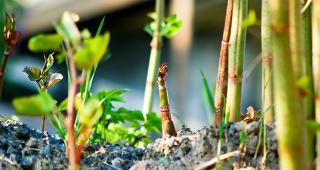 Bamboo © Erika J Mitchell/Shutterstock.com