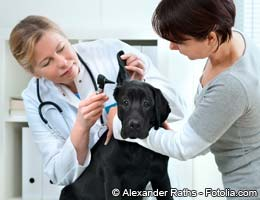 Fend off high veterinary bills