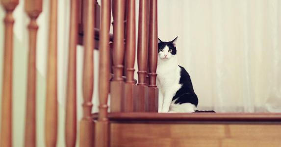 Cat in staircase © iStock