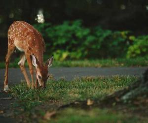 Deer eating grass by the road | Vladimir Kudinov/Unsplash