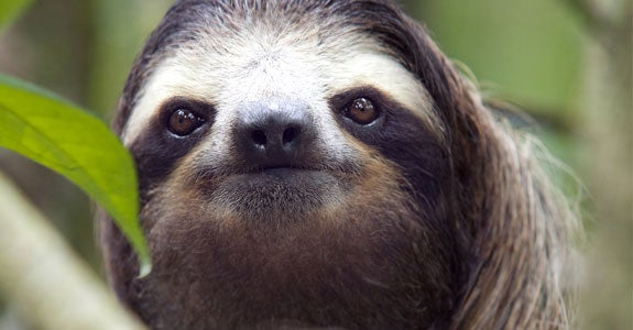 Sloth | Raúl Barrero photography/Moment/Getty Images