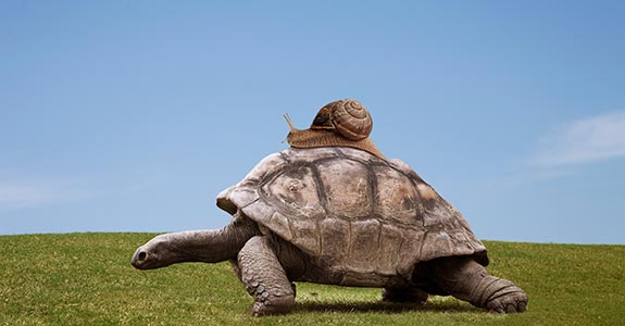 Snail on top of turtle | Buena Vista Images/DigitalVision/Getty Image