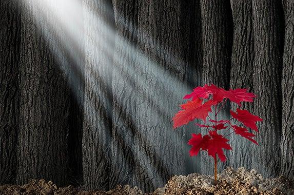 Young red leaf sapling: © Lightspring/Shutterstock.com