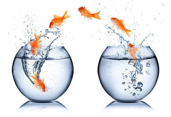 goldfish - change concept: © romrf/Shutterstock.com