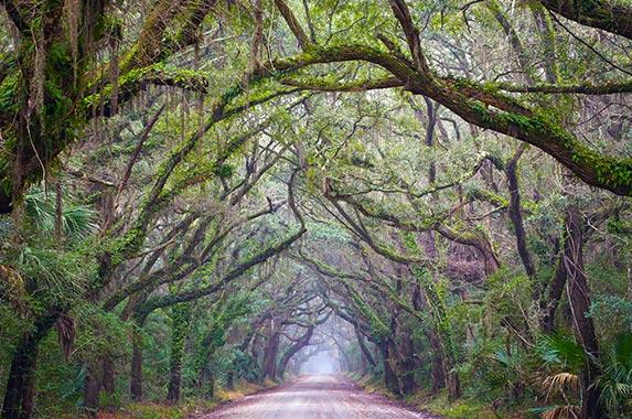 South Carolina | Daniela Duncan/Getty Images