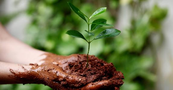 Hands holding plant © joy_stockphoto/Shutterstock.com