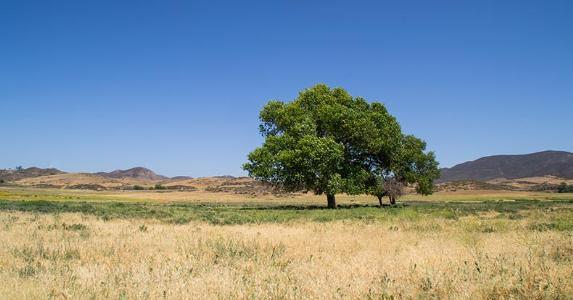 Single tree on field © Eddie J. Rodriquez/Shutterstock.com