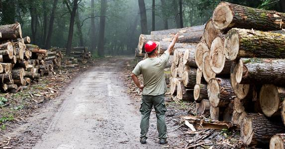 Lumberjack standing in front of stacked trunks in forest © Budimir Jevtic/Shutterstock.com
