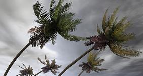 Palm trees in heavy wind © photobank.kiev.ua/Shutterstock.com