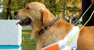Service dog © Boris Djuranovic/Shutterstock.com