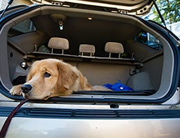 Best cars for dogs © Mat Hayward/Shutterstock.com
