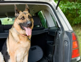 10 doggone ways to make pet travel easy