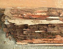 Termite infestation © BONNIE WATTON/Shutterstock.com