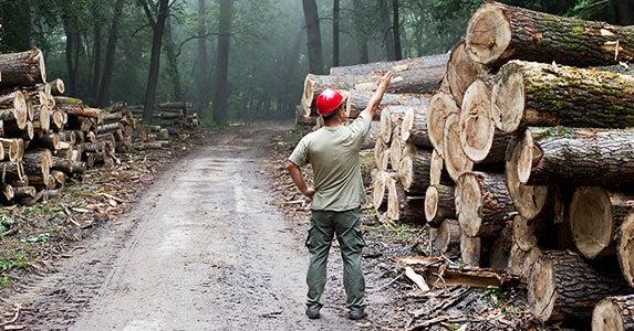 No. 1: Lumberjack © Budimir Jevtic/Shutterstock.com