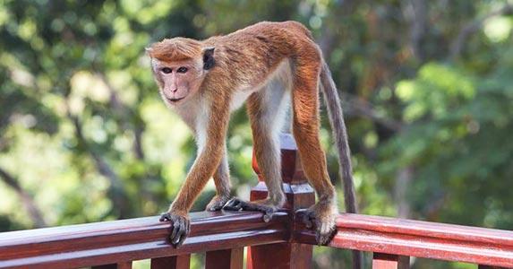 Live animals © Seraph P/Shutterstock.com
