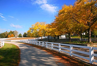 Kentucky © Mark Ross/Shutterstock.com