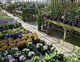 Landscape plants © Graeme Dawes/Shutterstock.com