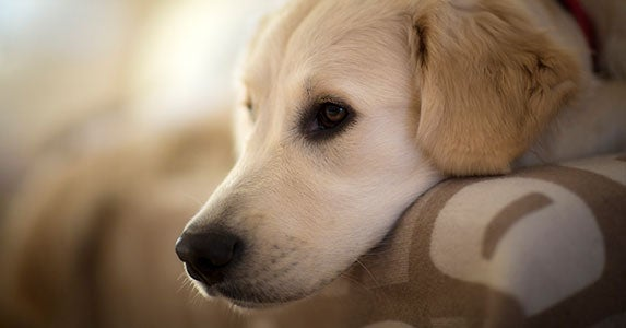 Don't deduct your pet, but … © iStock
