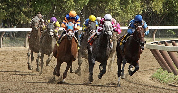 Racetrack bets and more © Cheryl Ann Quigley/Shutterstock.com