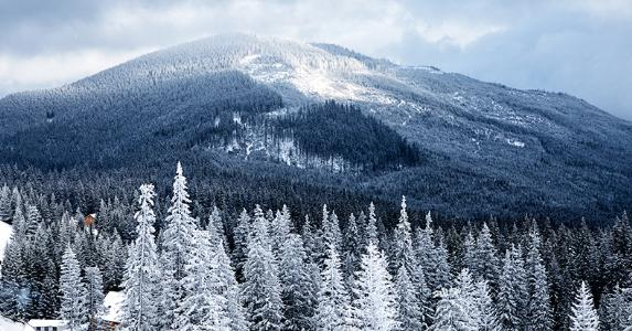 Tennessee trees covered with snow © Nickolay Khoroshkov/Shutterstock.com