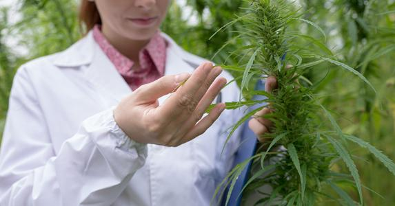 Woman inspecting cannabis plant | cyano66/Getty Images