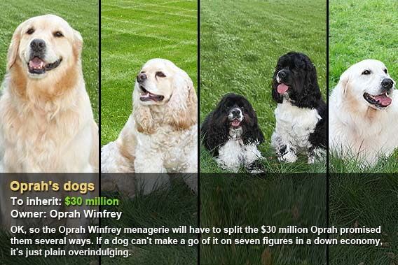 Oprah's dogs